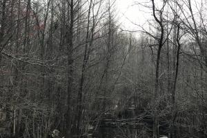 Mercer Mill Hunting Land with Timber in Bladen, NC (29 of 29)