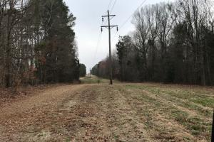 Mercer Mill Hunting Land with Timber in Bladen, NC (4 of 29)