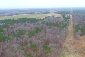 Mercer Mill Hunting Land with Timber in Bladen, NC (6 of 29)