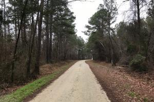 Mercer Mill Hunting Land with Timber in Bladen, NC (27 of 29)