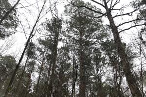 Mercer Mill Hunting Land with Timber in Bladen, NC (24 of 29)