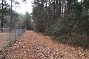 Mercer Mill Hunting Land with Timber in Bladen, NC (25 of 29)