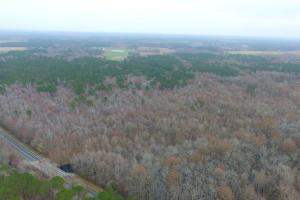 Mercer Mill Hunting Land with Timber in Bladen, NC (9 of 29)