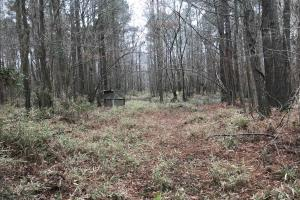 Mercer Mill Hunting Land with Timber in Bladen, NC (22 of 29)