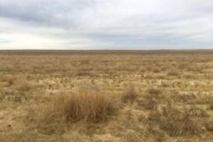 Kiowa County Ground For Sale - Haswell, CO