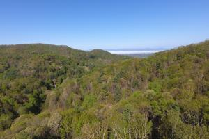 Private Cove, Springs, and Mountain Views - Buncombe County NC
