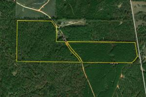 Town Creek Timber and Hunting Tract C - Randolph County AL