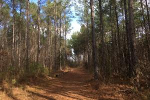 Tomnolen Tract in Webster County - Webster County MS