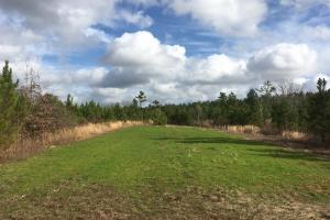 Tomnolen Tract in Webster County in Webster, MS (7 of 12)