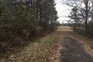 Tomnolen Tract in Webster County in Webster, MS (3 of 12)