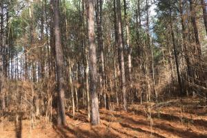 Tomnolen Tract in Webster County in Webster, MS (5 of 12)