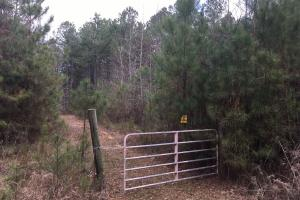 Tomnolen Tract in Webster County in Webster, MS (2 of 12)