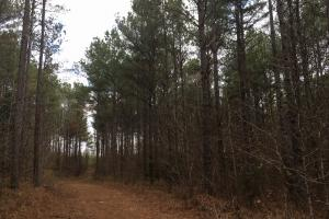 Tomnolen Tract in Webster County in Webster, MS (12 of 12)
