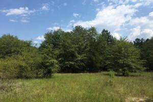Hunting Land and Home Site with Pond - Chesterfield County SC