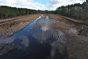 Hyde Impoundment - Hyde County NC