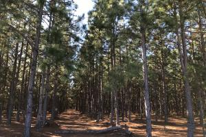 The Edgefield Highway Commercial Tract - Edgefield County SC