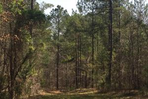Lancaster Timber Farm and Hunting Land - Lancaster County, SC