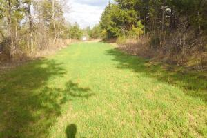 Wheeler Road Hunting and Recreation Tract - Lowndes County AL