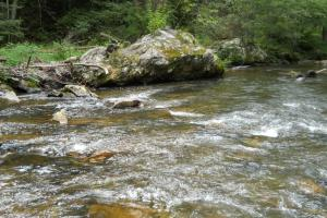 Mountain Fly Fishing and Hunting, Trout fishing along Big Rock Creek. (7 of 22)