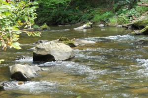 Mountain Fly Fishing and Hunting Trout fishing along Big Rock Creek. (19 of 22)