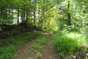 Mountain Fly Fishing and Hunting Access road to property. (8 of 22)
