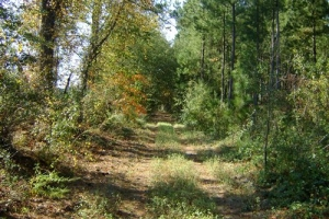 Private Estate & Hunting Land - Lexington County SC