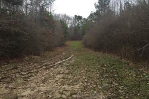 Perfect home or cabin site in Holmes, MS (1 of 9)