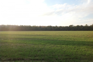Farmland-Recreational Tract  - Horry County SC
