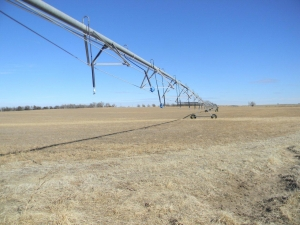 Kiowa County Irrigated Cropland - Kiowa County KS