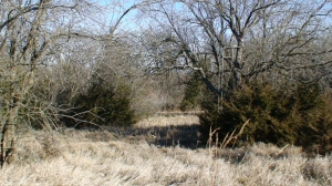 Numerous tree stand locations allow you to hunt the farm regardless of the wind. (21 of 40)