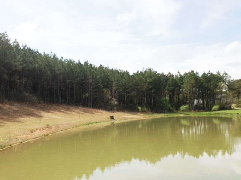 Estate Acreage With Pond In Clay County Alabama