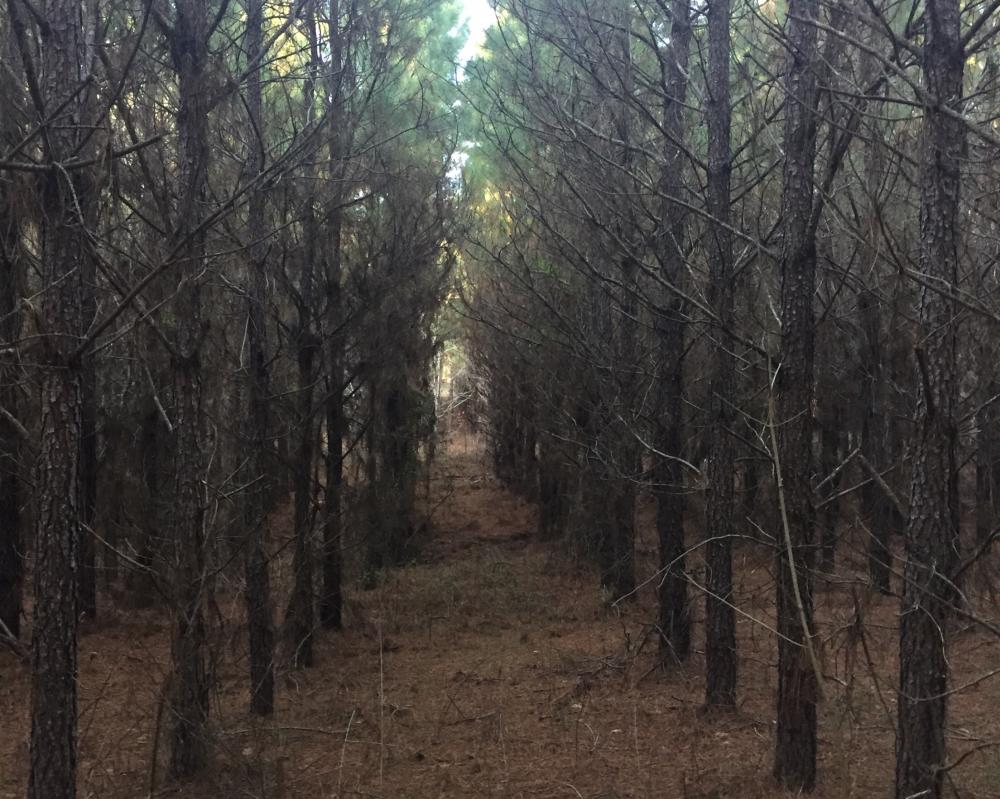 234-ACRES OF TIMBER AND RECREATIONAL PROPERTY WITH ROAD FRONTAGE in Yalobusha County, MS