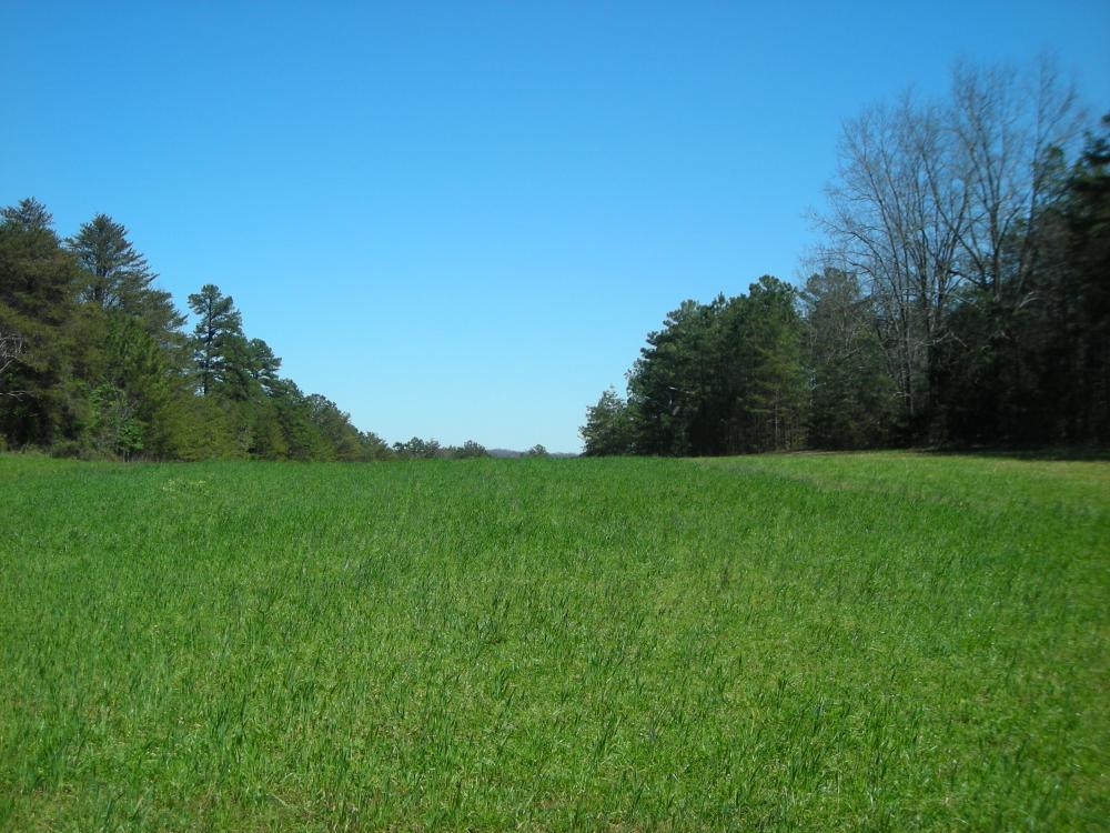 234 Acres Hunting, Recreational, Timber, Farm with Home in Floyd County, GA