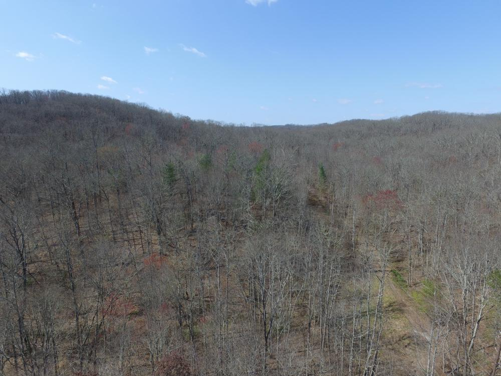 East Tennessee Wooded Hunting & Recreation Property in Roane County, TN