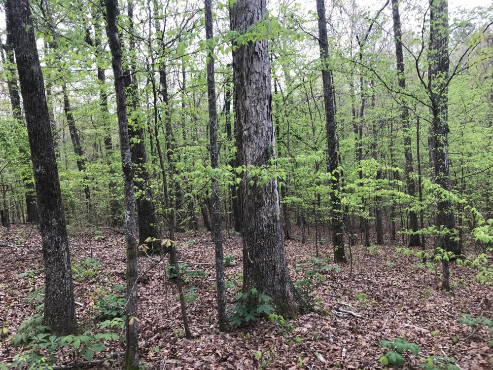Beaver Creek Hunting & Timber Investment