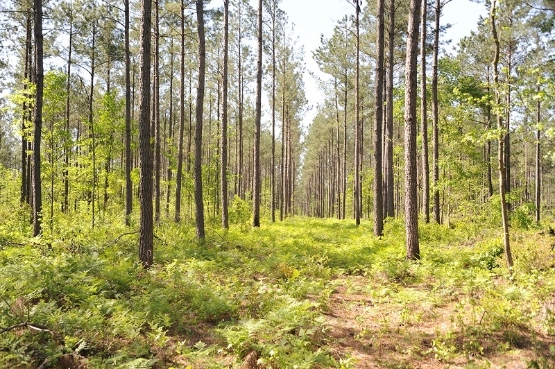 St. Pauls Hunting & Timber Investment