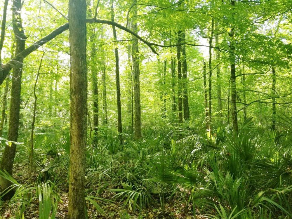 Big Swamp Creek Hunting and Timber Investment in Lowndes County, AL