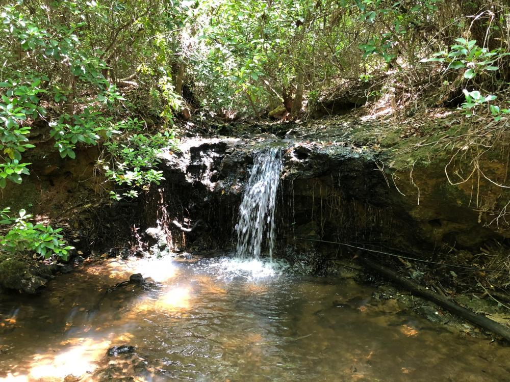 Evergreen Waterfall Farm and Timberland Investment in Conecuh County, AL