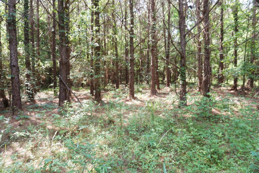 Akron Timber and Hunting Opportunity in Hale County, AL