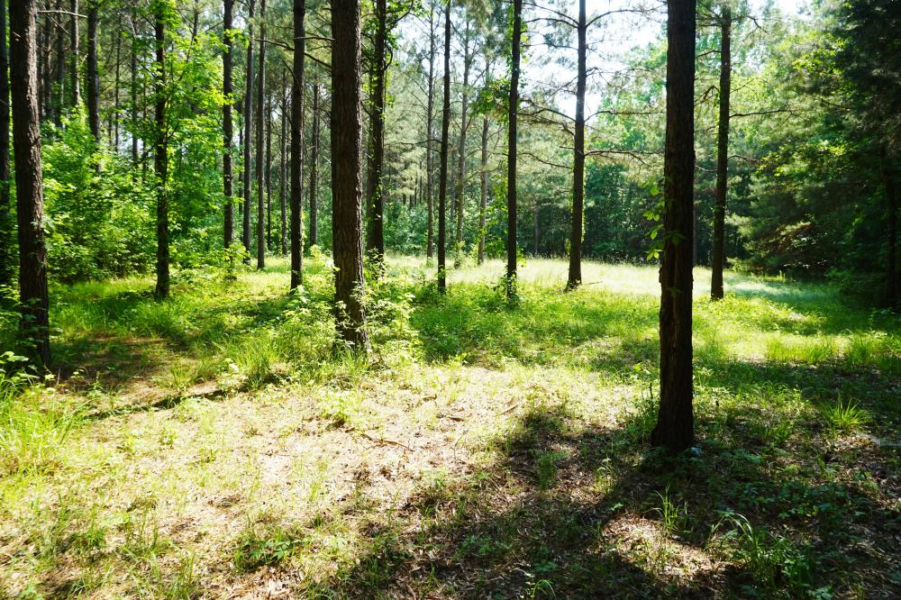 Akron Hunting and Timber Investment in Hale County, AL