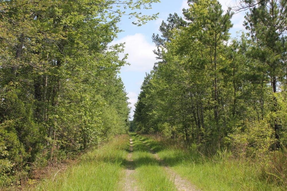 National Forest 690 +/- Acres