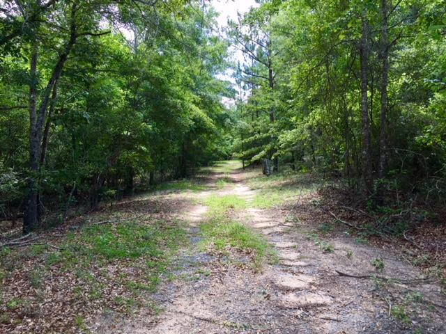 300 Acre Hunting Tract in Schley County, GA