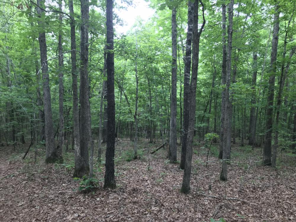 40 Acre Residential Development in Saline County, AR