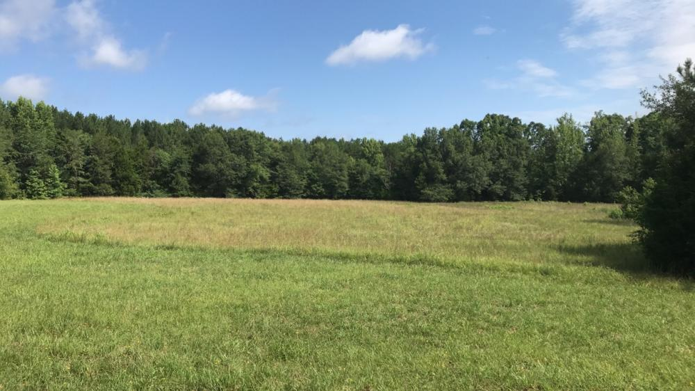 Greenville Hunting and Homesite Land