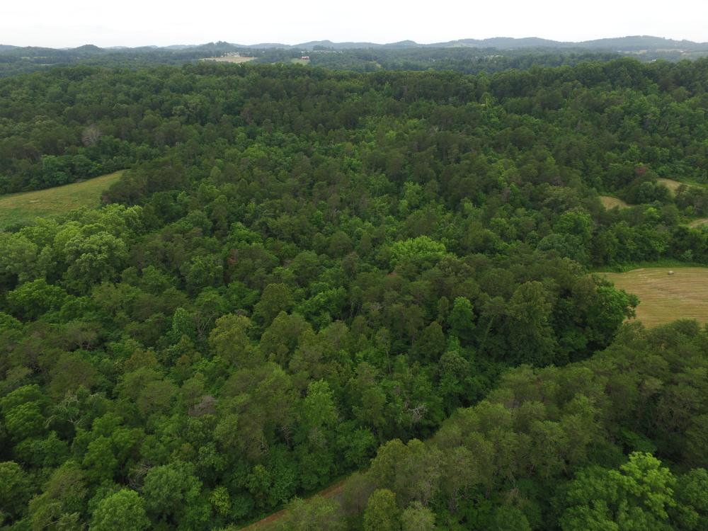 Dandridge Wooded Land Tract
