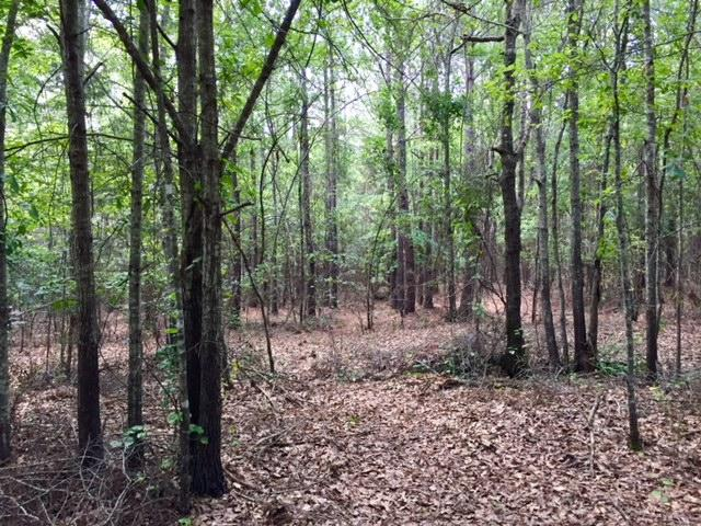 Marion County Hunting Tract in Marion County, GA