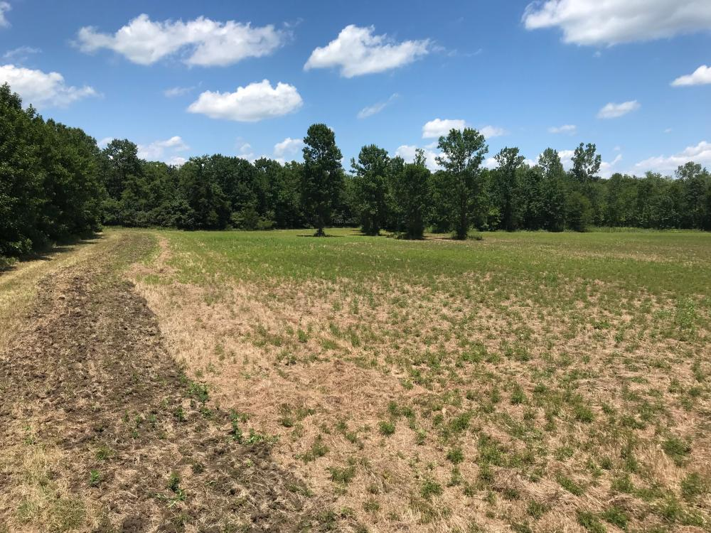 Bigbee Valley Hunting/ Potential Agriculture Tract in Noxubee County, MS