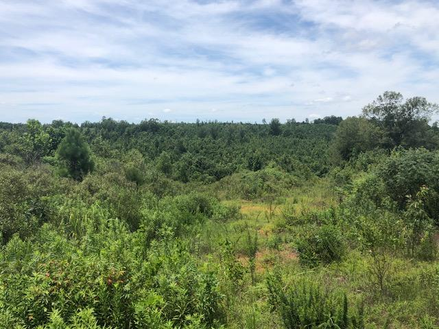 Webster County 80 Acres in Webster County, MS