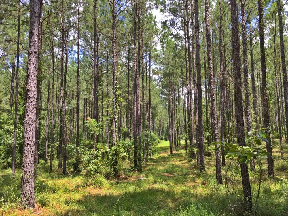 Walker Springs Hunting Camp and Timber Investment in Clarke County, AL