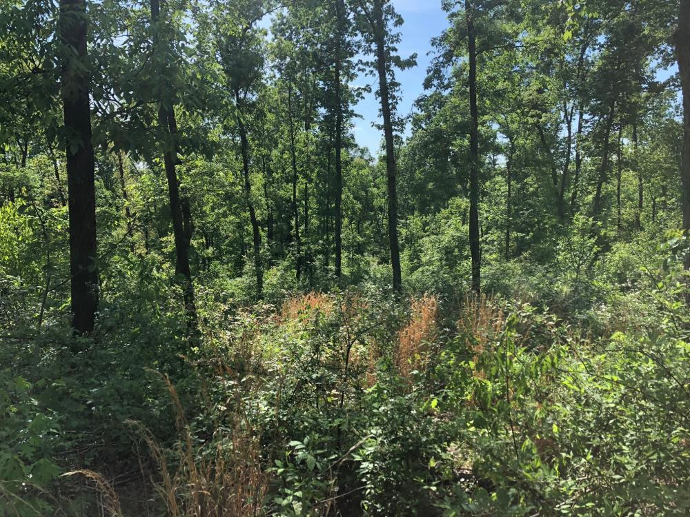 81 acre hunting tract in Muhlenberg Kentucky